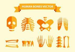 Vector de huesos humanos