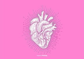 HEART - LINE DRAWING vector
