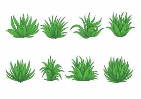 Maguey vector set