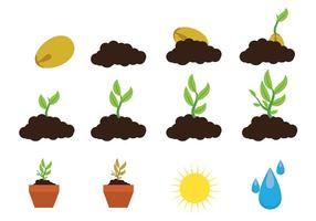 Grandir vecteur icône plante