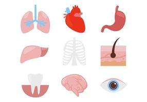 Human Organ Body Parts Icons Vector