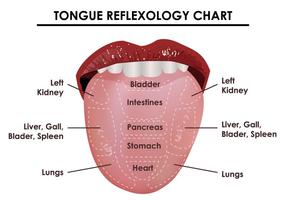 Tongue Reflexology Chart vector