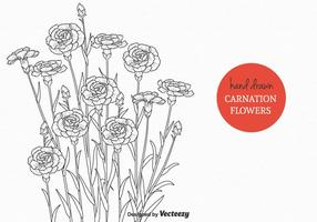 Free Carnation Blumen Vektor-Illustration