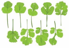 Ensemble de feuilles de cilantro plat