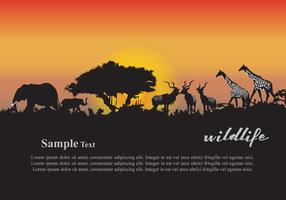 Animals Sunset vector