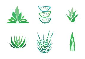 Set of Aloe Vera Drawings vector