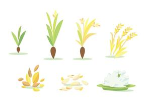 Rice Field Cycle Vector Set