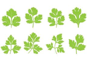 Set av Cilantro Leaf Vector