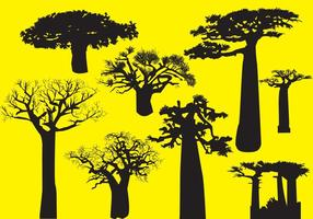 Silhuett Baobab Träd