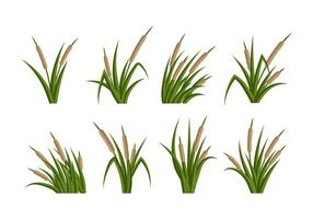 Cattails Vector Flat