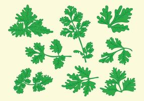 Fri Cilantro Vector