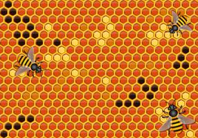 Vector libre de la miel de fondo