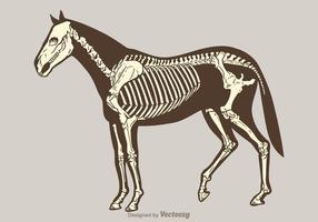 Esqueleto libre del caballo del vector