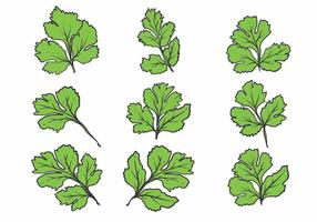 Handdragen Cilantro Icon Set
