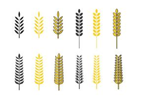 Golden Oat Vector Set