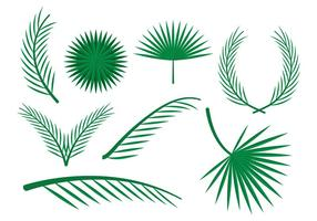 Free Palm Leaves Vector Ornaments