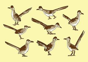 Gratis Roadrunner Vogel Vector