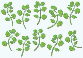 Cilantro Vector Herbs