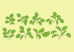 Cilantro Vector Icons