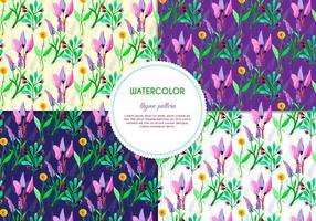 Flor púrpura y patrones del vector del tomillo