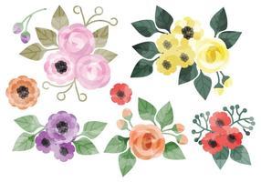 Elementos florales de la acuarela del vector