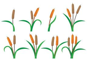 Cattails vector