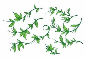 Liana Plant Vector set