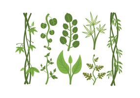 Vecteurs de plantes tropicales