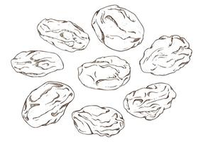 Illustration vectorielle libre des raisins