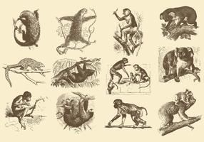 Illustrations Vintage des animaux
