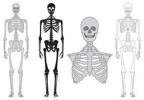 Scheletro e ossa insieme vettoriale