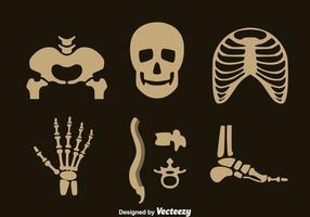 Set vettoriale scheletro umano