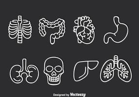 Conjunto de vetores de órgãos humanos