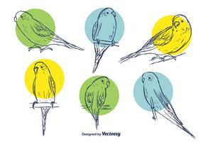 Budgie Vector Set