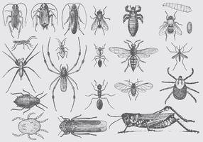 Vintage Pest Drawings vector