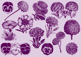 Flores de la vendimia