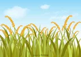 Vector Rice Field Illustration