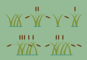 Reeds Vector Illustrations