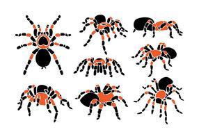 Tarantula Vektor