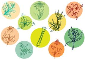 Vecteurs d'herbes libres