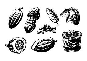 Vettore di incisione di fave di cacao