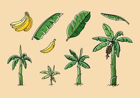 Vecteur dessiné à la main à l'arbre à la banane
