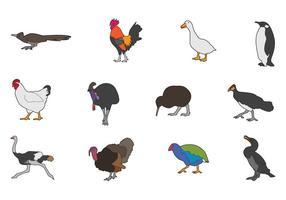 Vectores de pájaros sin vuelo