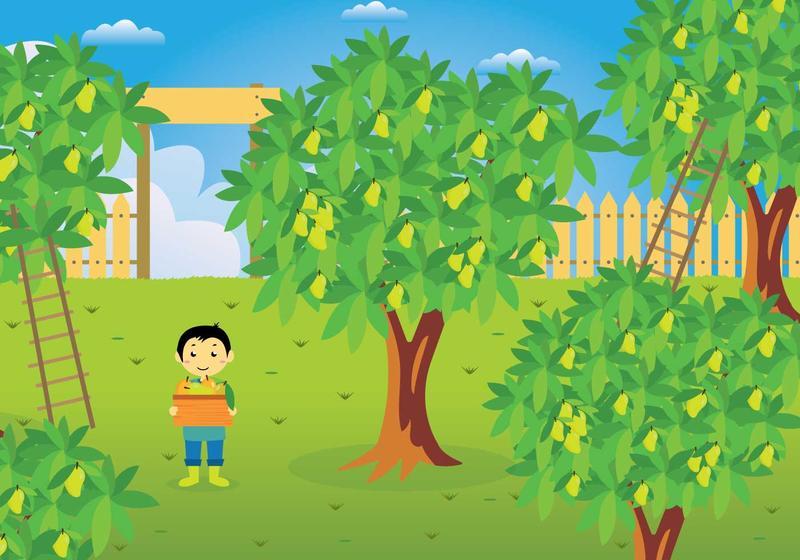 Mango Tree Illustration Download Free Vectors Clipart Graphics Vector Art Tree cartoon , mango , green leafed tree art png clipart. mango tree illustration download free