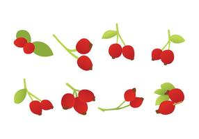 Free Rosehip Vector