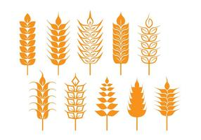 Oat and Wheat Stalk Icons vector