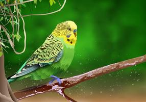 Beautiful Budgie On a Branch Vector