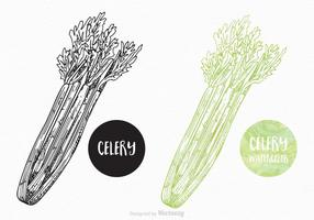 Free Hand Drawn Celery Vector Design