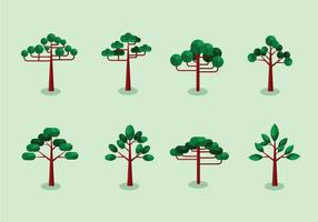 Araucaria trees flat design