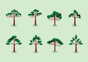 Araucaria Bäume flaches Design